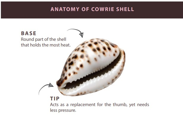 New cowrie glacial shell